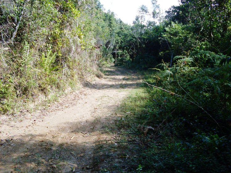 Edge Of The Worldcaminho da roça Floresta Mata Trees Road Arvores... 🌿❤ Caminho Forest Woods