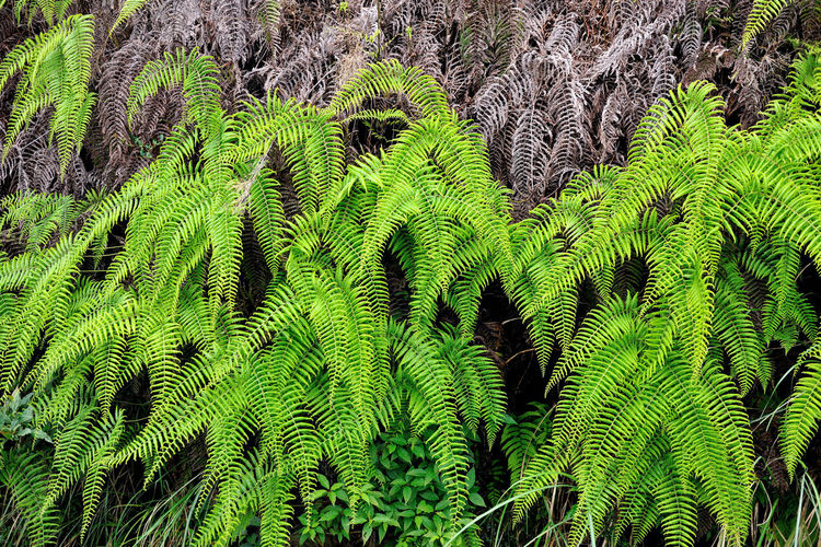 Flora in the ferns, growing dense. Green Growth Natural Natural Beauty Nature Backgrounds Beauty In Nature Close-up Day Expand Ferns Fragility Full Frame Green Color Growth Leaf Nature No People Outdoors Plant Plant Kingdom Sky Tree