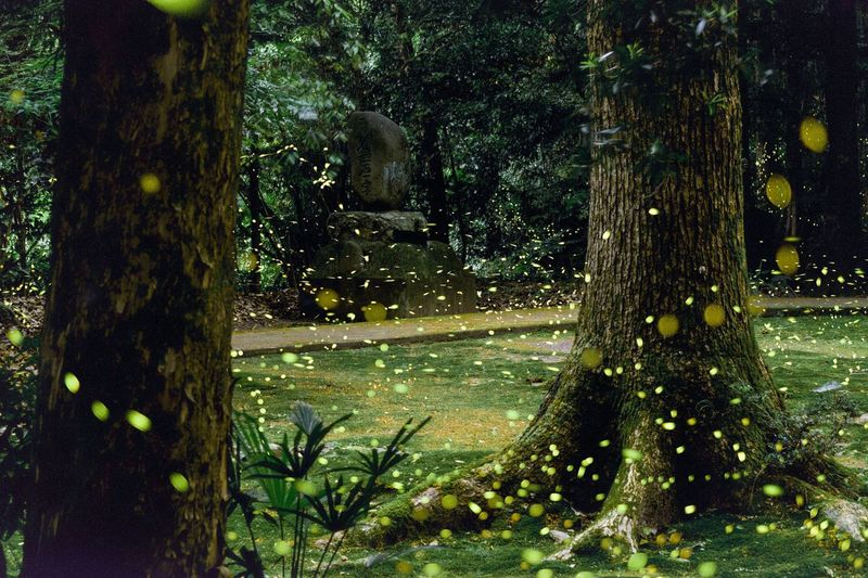Long Exposure Tree Nature No People Outdoors Beauty In Nature Beauty In Nature Japan Eye Em Nature Lover Firefly