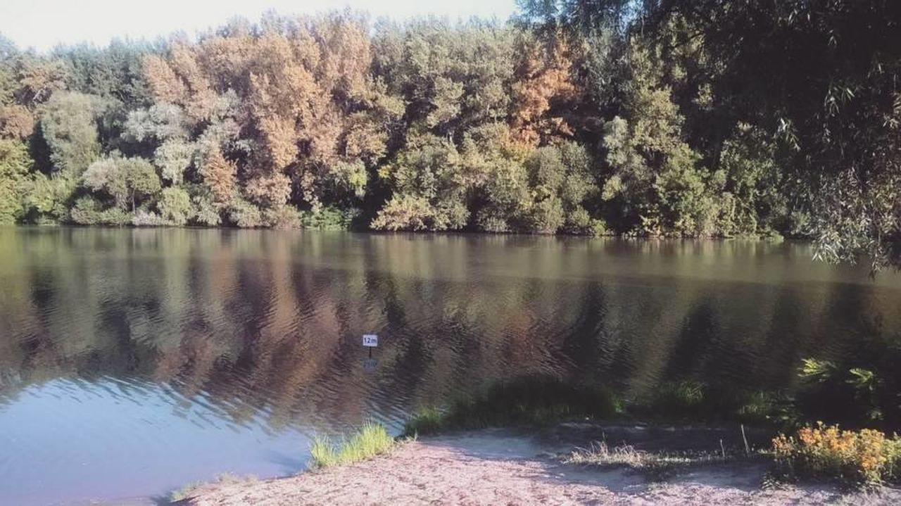 tree, nature, water, lake, tranquil scene, no people, beauty in nature, tranquility, outdoors, growth, day, scenics, forest, animal themes, sky