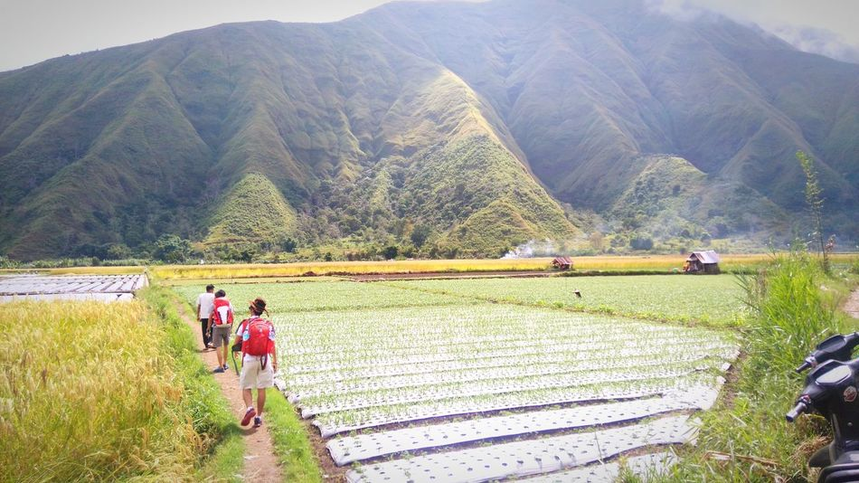 Explore Agriculture Farm Farmer Field Rural Scene Terraced Field Mountain Hill Highland Landscape People Nature Explore Outdoors Day Indonesia_photography Sembalun Lombok Pergasinganhill Explorelombokisland Wonderful Indonesia Landscape_photography Photography Takenbyme Lost In The Landscape