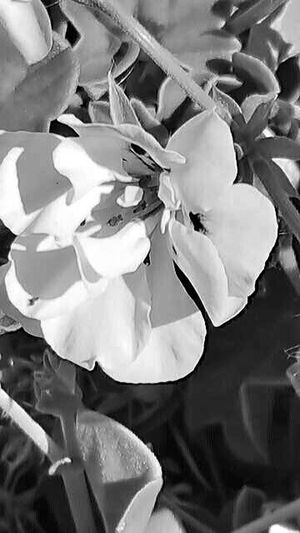 Black or White Check This Out White Flower Bud black and white, pretty flower,