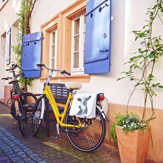 Good morning,July 💙 hope you are good to us... Residential Building Window Box Potted Plant Inspirations Everywhere. DoorsAndWindowsProject See What I See From My Point Of View Walking Around Taking Pictures Facadelovers Nature On Your Doorstep Seeking Inspiration Freshness Cityscape Soloparking Strolling Around Parked Bike Bicycleporn Wellplacedbike BYOPaper! Façade
