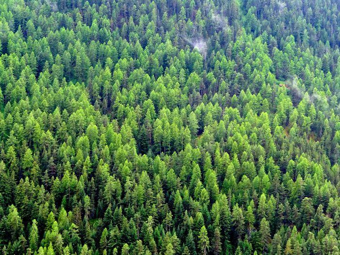 Full frame shot of forest