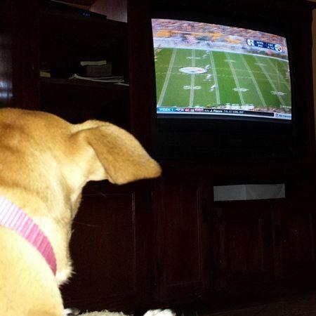 We're watching our Giants play Bigblue Newyorkgiants Newyork Giantspride giants gmen bleedredandblue