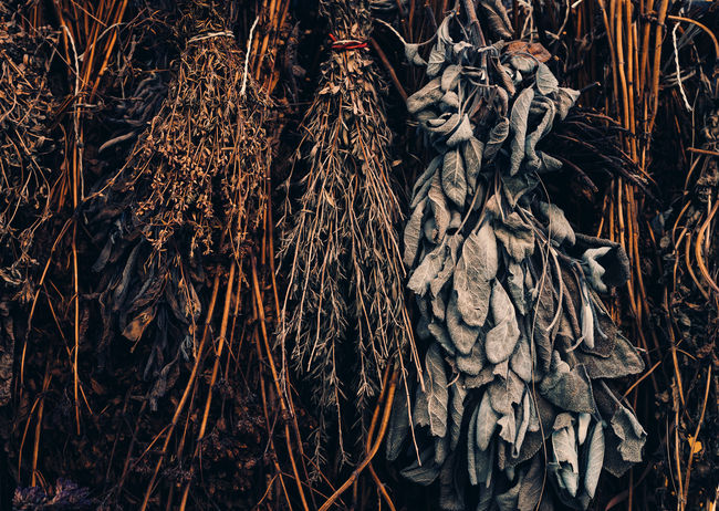 dried Herb Plants Herbs Sage Abundance Brown Close-up Collection Day Dried Dried Herbs Dried Plant Dry Full Frame Herbal Herbal Medicine Herbal Tea Juniper Leaf Nature Outdoors Plant Plant Part Textured