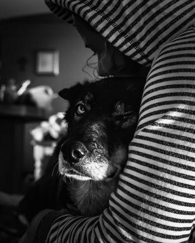 Close-up of woman embracing dog
