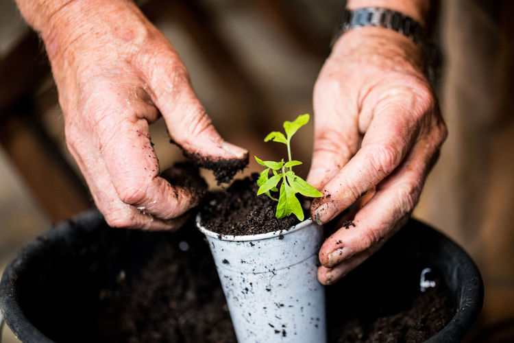 Cropped hand of person planting