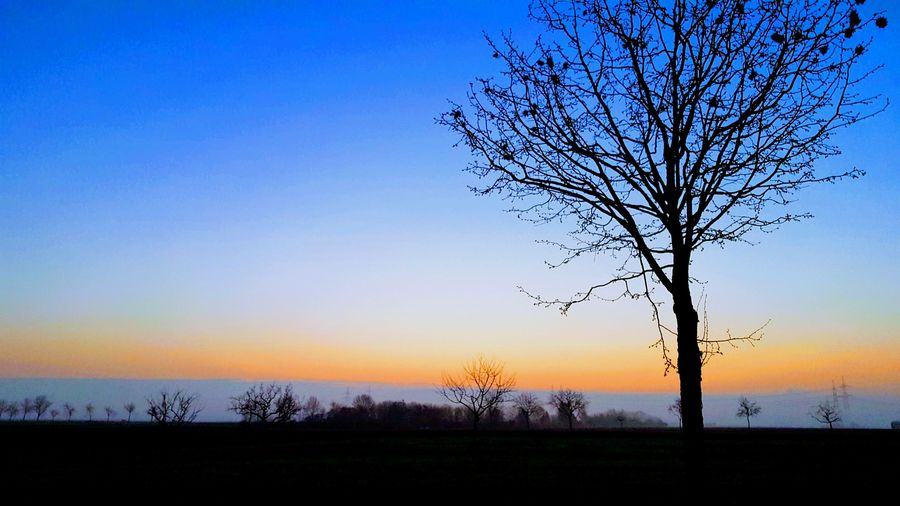 Sunrise Earlybird Capture The Moment EyeEmReady Tree Bare Tree Silhouette Nature Scenics Beauty In Nature Sky Tranquil Scene Landscape No People Outdoors Blue Clear Sky