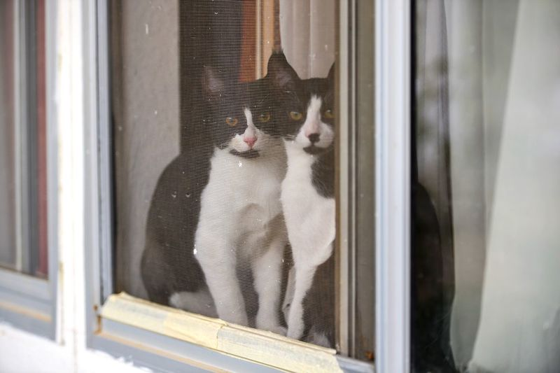 Portrait of cats at window