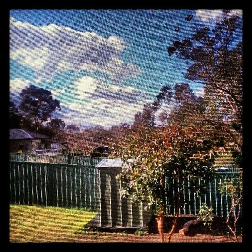 Outside the window Blue Sky Fluffy Clouds Trees So Many Sounds Light Sun Smells Life