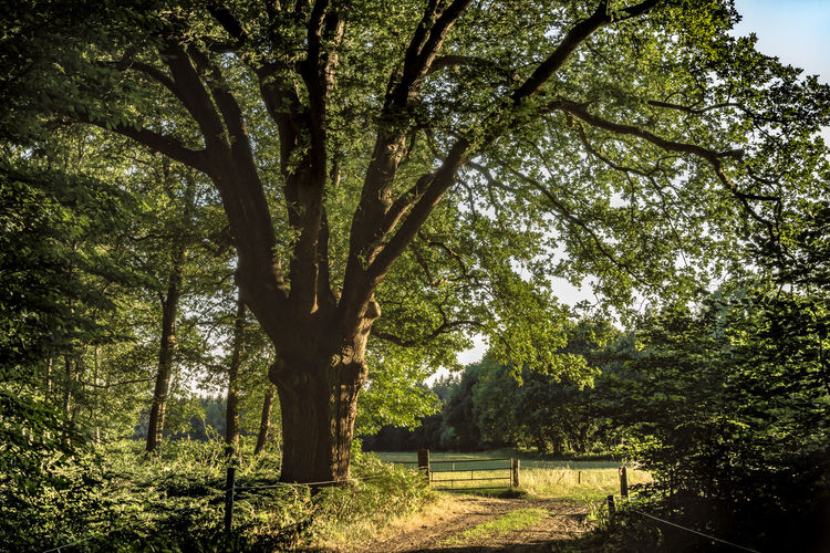 Beauty In Nature Branch Day Field Forest Green Color Growth Land Nature No People Outdoors Park Plant Scenics - Nature Sunlight Tranquil Scene Tranquility Tree Tree Trunk Trunk
