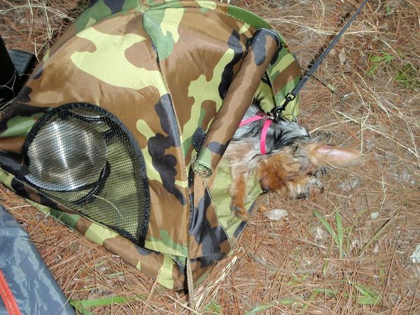 Camping out. After a day of kayaking in the wild, Molly B., the kayaking Yorkshire Terrier, rests in her pup tent. Yorkshire Terrier Yorkie Pets Corner Camping Camping Out Dogs Of Summer Tents Roughing It Camp Site Dog Sleeping  Animal Themes