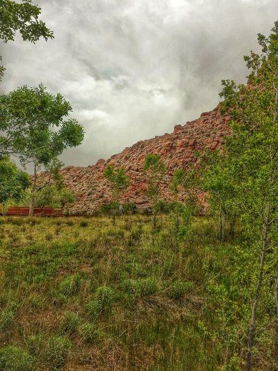 The meadow at Calico Basin Taking Photos Nature Photography Lasvegasnevada Summerlin