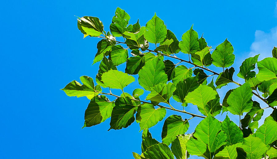 leaf sky Sky