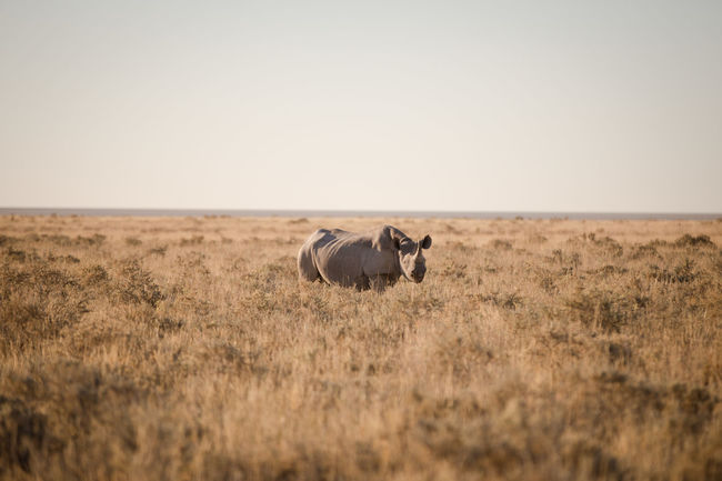 50+ Rhinoceros Pictures HD | Download Authentic Images on EyeEm