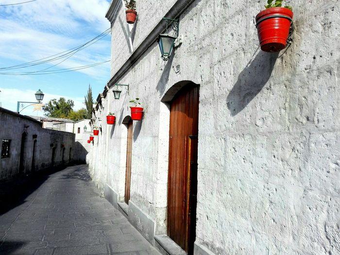 My Home GREEN LIFE Plants 🌱 Street Life Barrio San Lazaro - Arequipa
