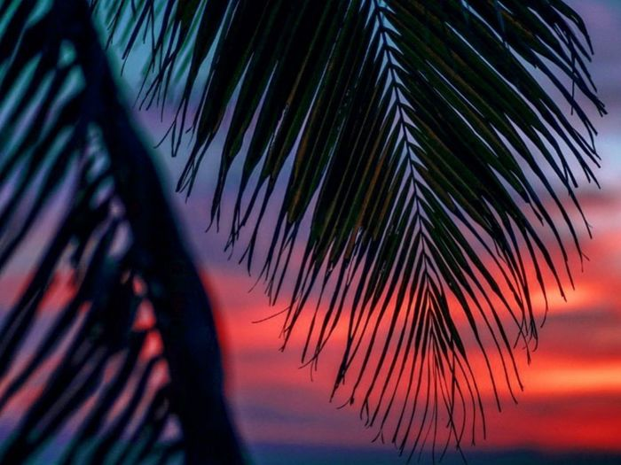 Close-up of silhouette palm tree against sky during sunset
