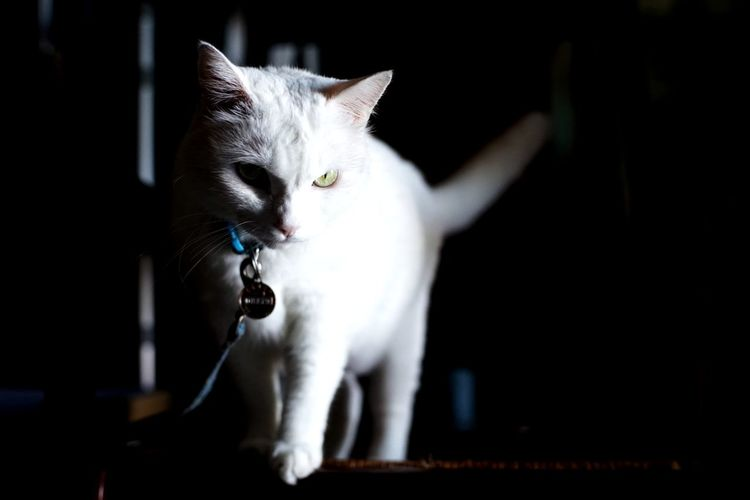 Cat Katze Neko