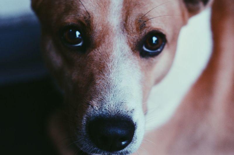 Dogs do speak,