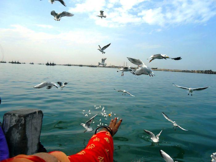 Cropped hand feeding seagulls at sea