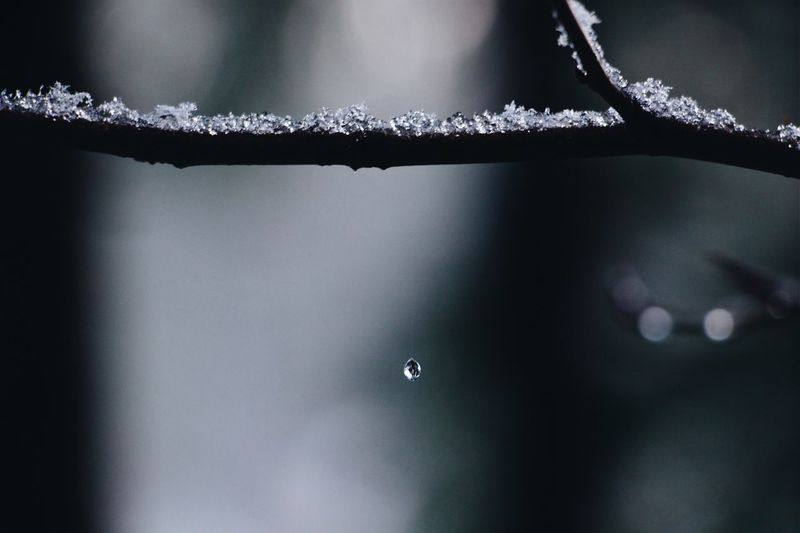 Close-up of raindrops on branch during rainy season