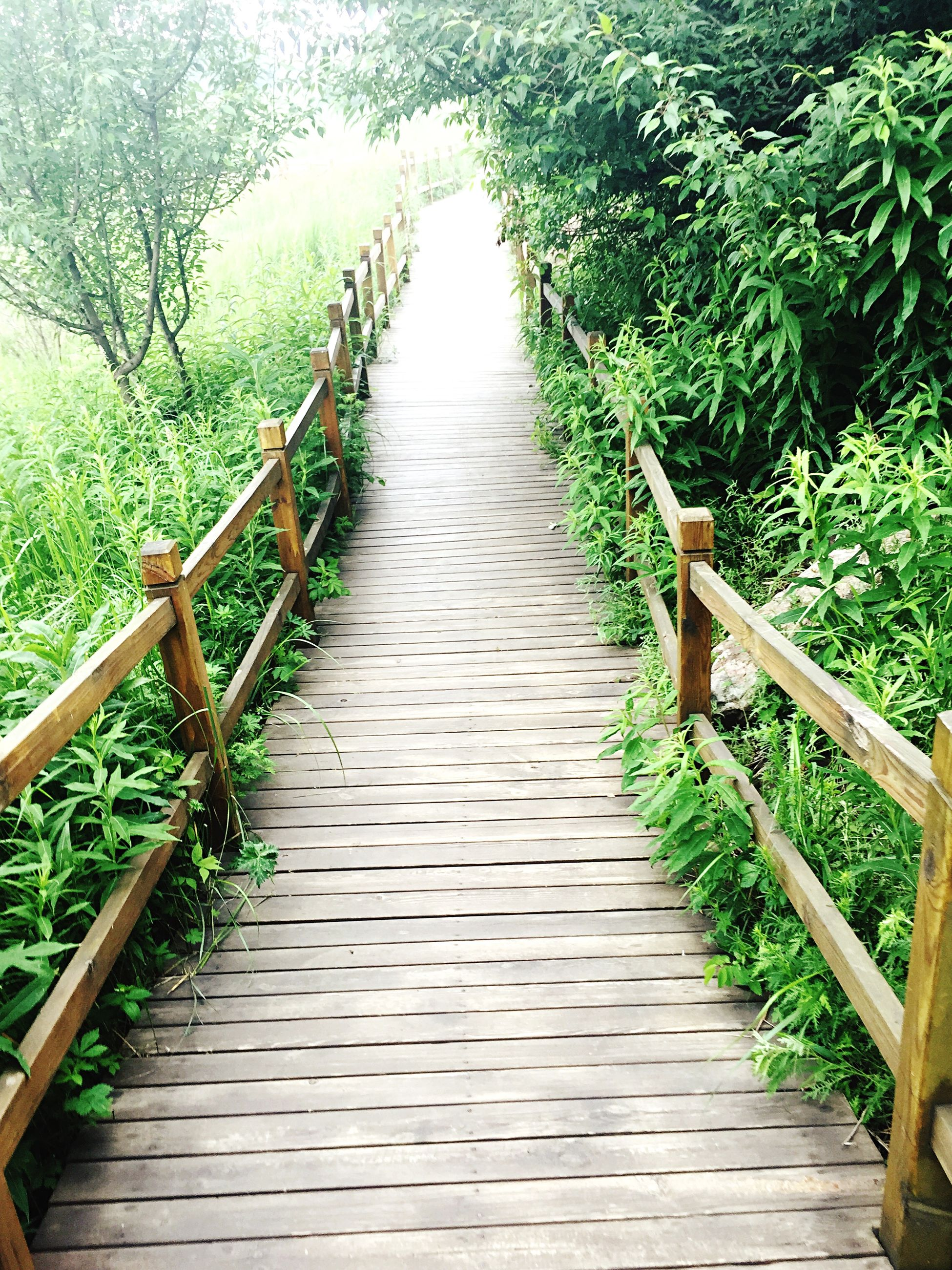 the way forward, railing, diminishing perspective, footbridge, tree, vanishing point, tranquility, narrow, connection, growth, plant, nature, boardwalk, wood - material, walkway, long, no people, tranquil scene, green color, outdoors