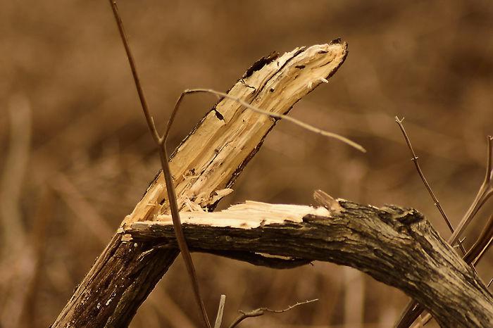 Bourley Heath. Blurred Background Broken Broken Tree Destruction In Nature Focus On Foreground Simple Image