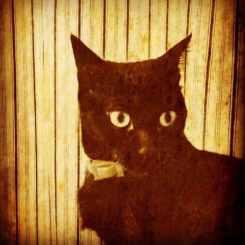 Catlover Cat Cats Catpic Caturday Instacat Instapet Picsart Sepia Instagram Instaday Instamood Kedi Karakedi BLackCat Nature Zeyna