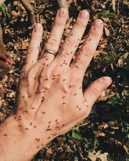 Cropped Image Of Hand With Ants At Field