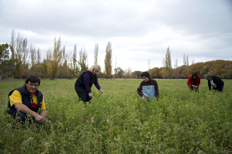 Gallego Family works in a lucerne field in Río Negro, Argentina. Family Family❤ Lucerne Adult Alfalfa Beauty In Nature Cloud - Sky Day Environment Family Time Field Grass Group Of People Land Landscape Nature Plant Real People Sky This Is Family Women