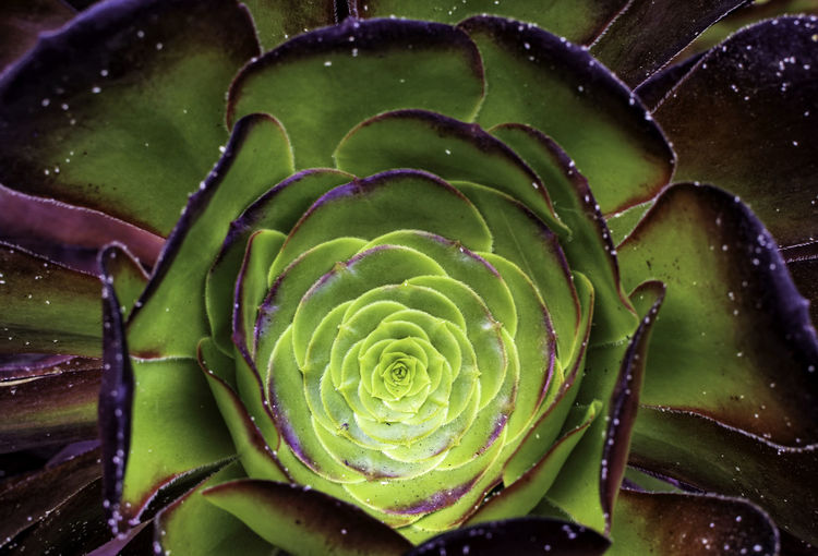 Heart of a succulent plant. Beauty In Nature Botany Center Day Glow Green Color Growth Inward Leaf Nature No People Outdoors Plant Succulent Plant Succulents