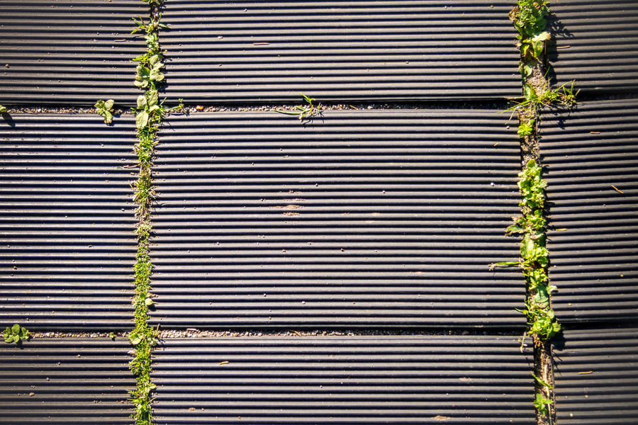 Architecture Backgrounds Built Structure Close-up Day Garten Gehweg Growth Holz Holztextur Ivy Nature Nature Photography No People Outdoors Pattern Plant Rusty Shutter Textured  Wood - Material