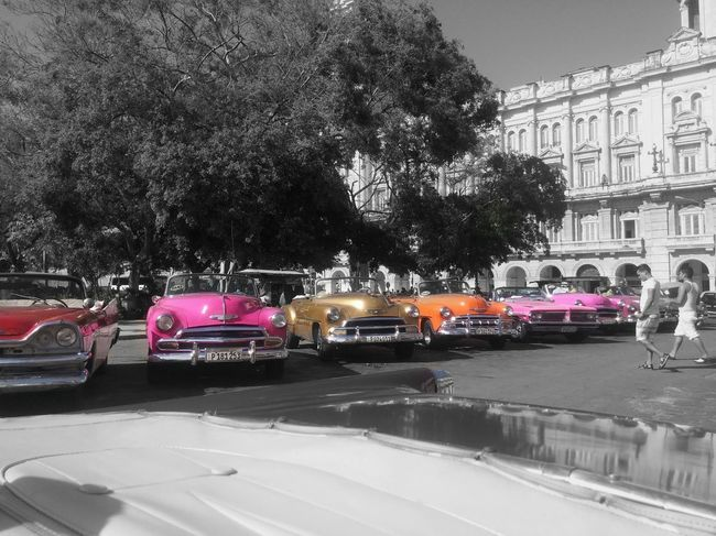 Un peu de couleur sur un avenir terne Car Voiture Retro Old Car Collection Car Cuba Cuba Collection Cuban Life Cuban Cars Cuba Streets City Tree Water Sky Architecture Building Exterior Vehicle