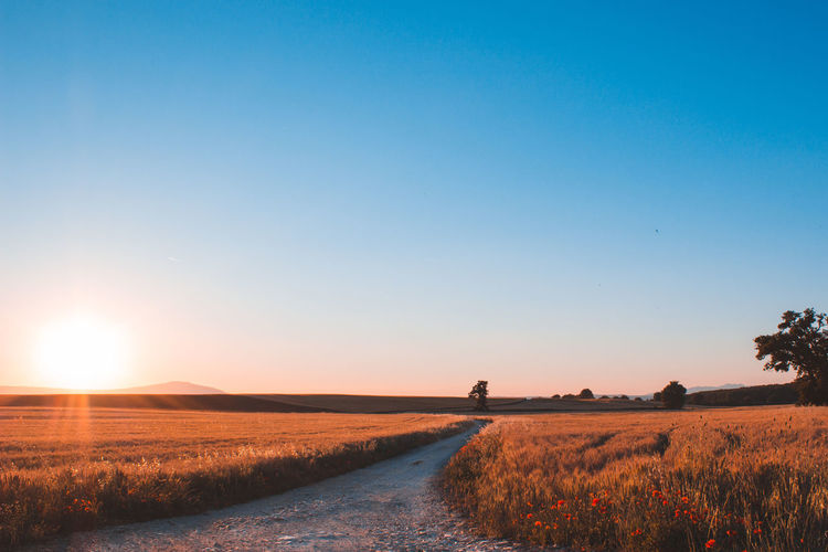 Road amidst field against clear sky during sunset