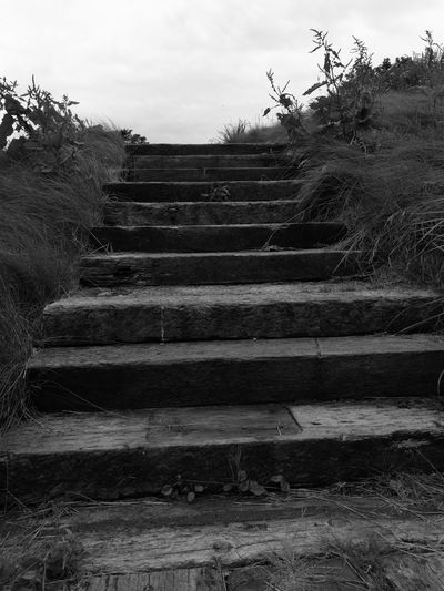 Steps Steps And Staircases Scottish Black And White Photography Eyemphotography Day Out Walking Around Taking Photos The 00 Mission Fresh On Eyeem  This Week On Eyeem Hanging Out Beauty In Nature Escaping Scotland Woodland Walk Into The Woods Step By Step