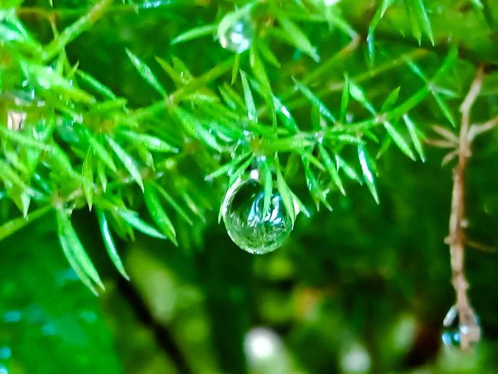 dew drops at