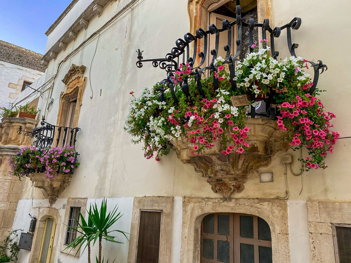 Low angle view of potted plant against building