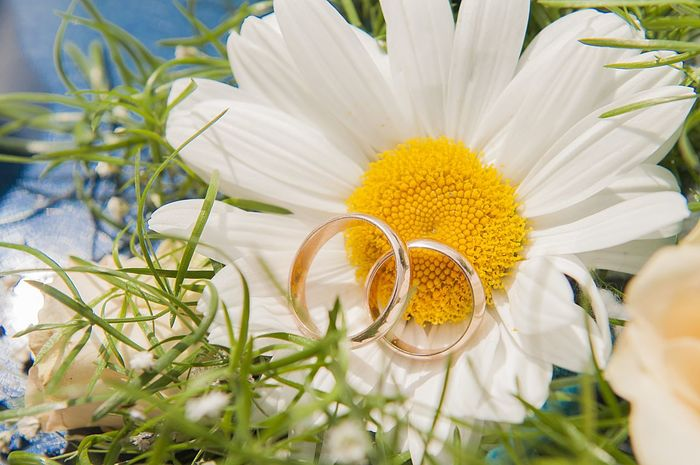 Beauty In Nature Close-up Day Flower Flower Head Fragility Freshness Growth Leaf Nature No People Outdoors Petal Plant Pollen Rings Wedding White Daisy