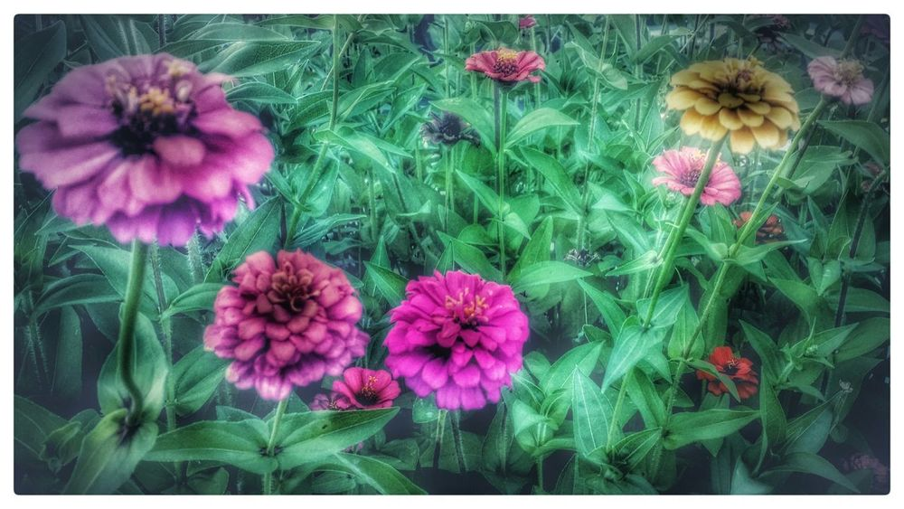 Hdr_Collection Floral Flowers Flowers,Plants & Garden HDR Effect Nature On Your Doorstep Hdr_gallery EyeEm Flower Outdoor Photography Enjoying The View