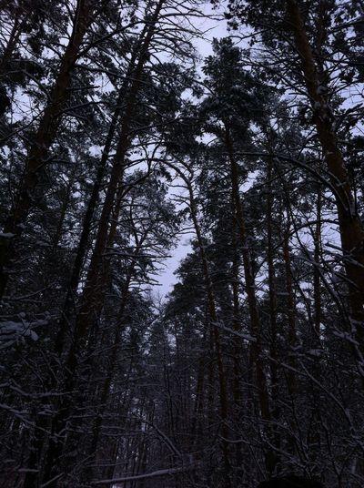 Лес в мирном зимой прекрасен