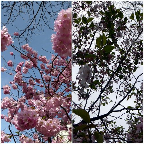 View From 31.March And Today Fragility Of Life Circleoflife Millennial Pink Beauty In Nature Springtime💛 For My Friends 😍😘🎁 Enjoyinglife  Looking Up😍 Growth Apple Blossom Fragility Life Is Short, Enjoy Every Moment You Got Nature