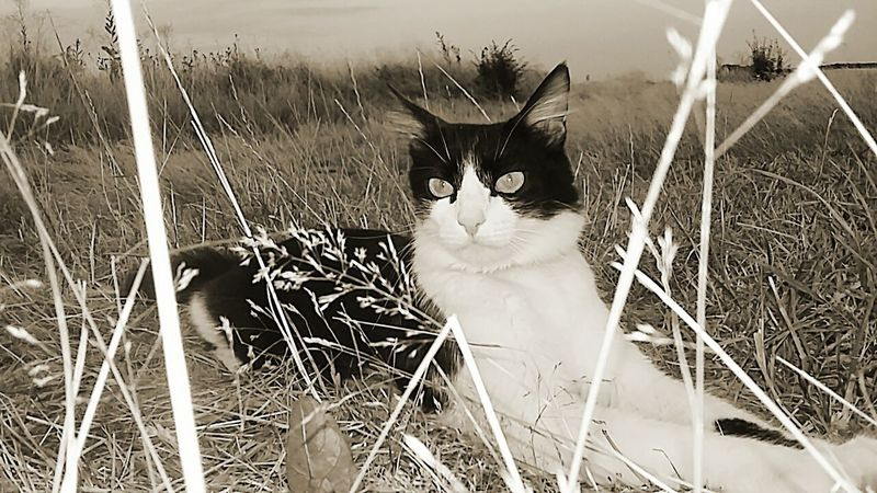 Cat Pets Animal My Cat Beautiful Cat Photography My Shot  Black And White