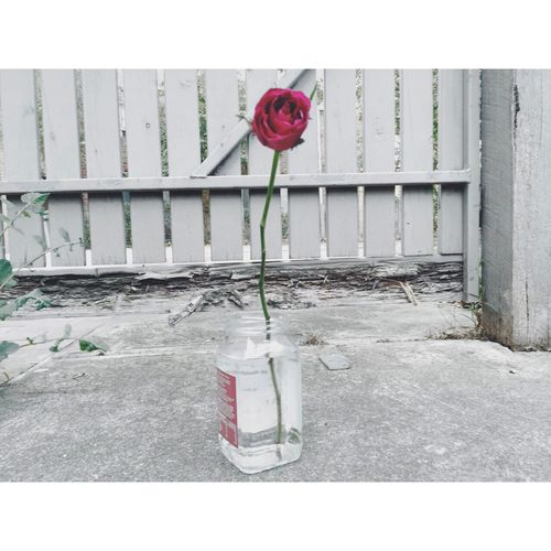 Flowers Redroses