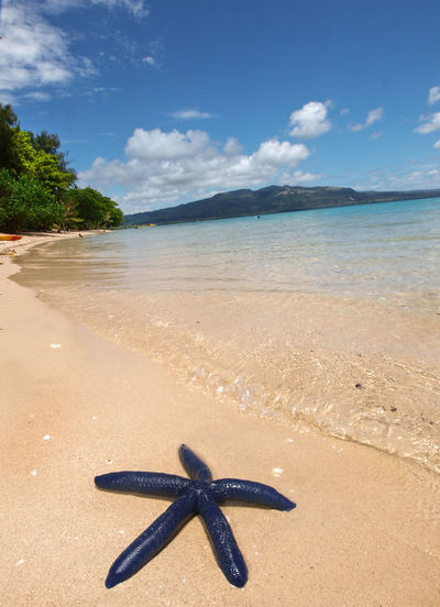 Blue Star Fish Pele Island Vanuatu Beach Beauty In Nature Cloud - Sky Horizon Over Water Melanesian Nature No People Outdoors Pacific Pacific Ocean Sand Sea Sea Life Sky Star Fish Starfish  Tam Tam Tourism Tranquil Scene Tranquility Travel Travel Destinations Tropical Climate Vacations Vivid International