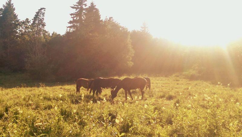 Horses Horse Forest Summer Sun Sunny Sunny Day Sweden Sverige