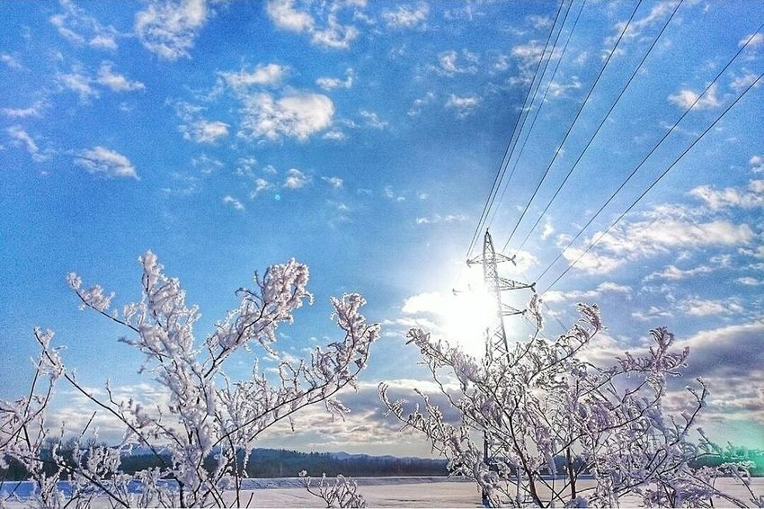 brilliant❇ Sky Blue Nature Tree No People Outdoors Beauty In Nature Day Naturelandscape Landscape Photography Winter Wonderland Trees And Sky Trees And Nature Tree And Snow Ice Fairy Blue Sky Frozen Leaves Frozen Trees Frozen Landscape  北海道 冬 Brilliant White Winter White White Winter Treelovers