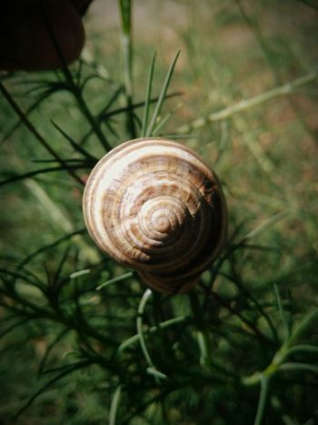 Snail One Animal Gastropod Animal Themes Spiral Nature Animals In The Wild Fragility Close-up Outdoors No People Day Hidden Gem Fibonacci Spiral Serenity EyeEmNewHere EyeEm Selects