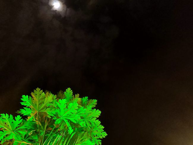 Tree & moon Shotononeplus6 Clearsky Nightshot Sky Black Background Space Close-up Green Color Plant Plant Life