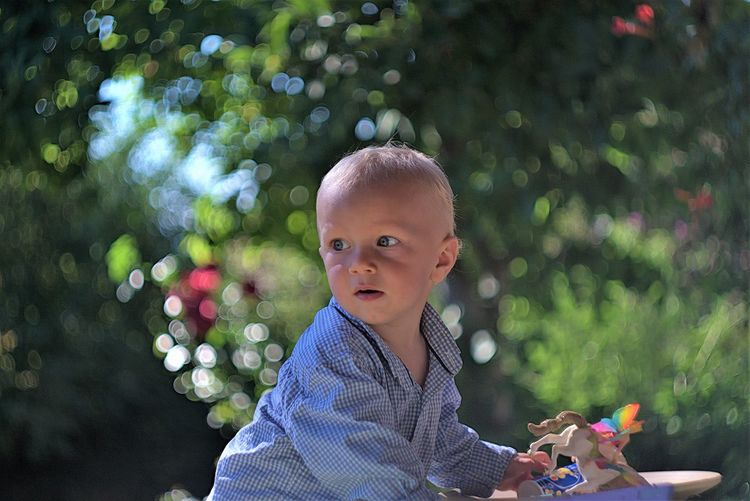 Portrait of cute boy holding plant